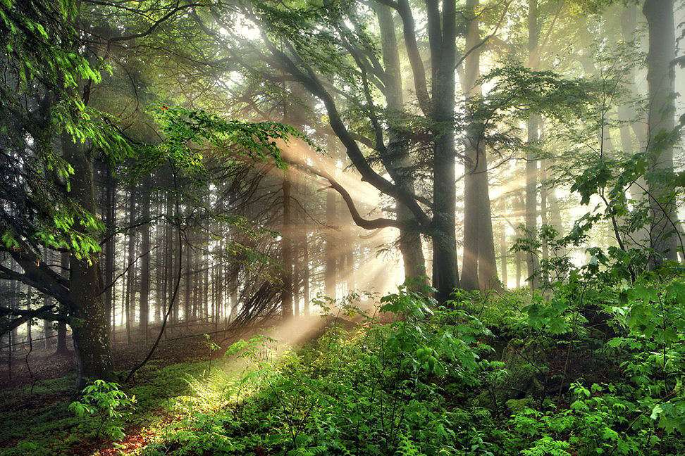 Sunray Forest