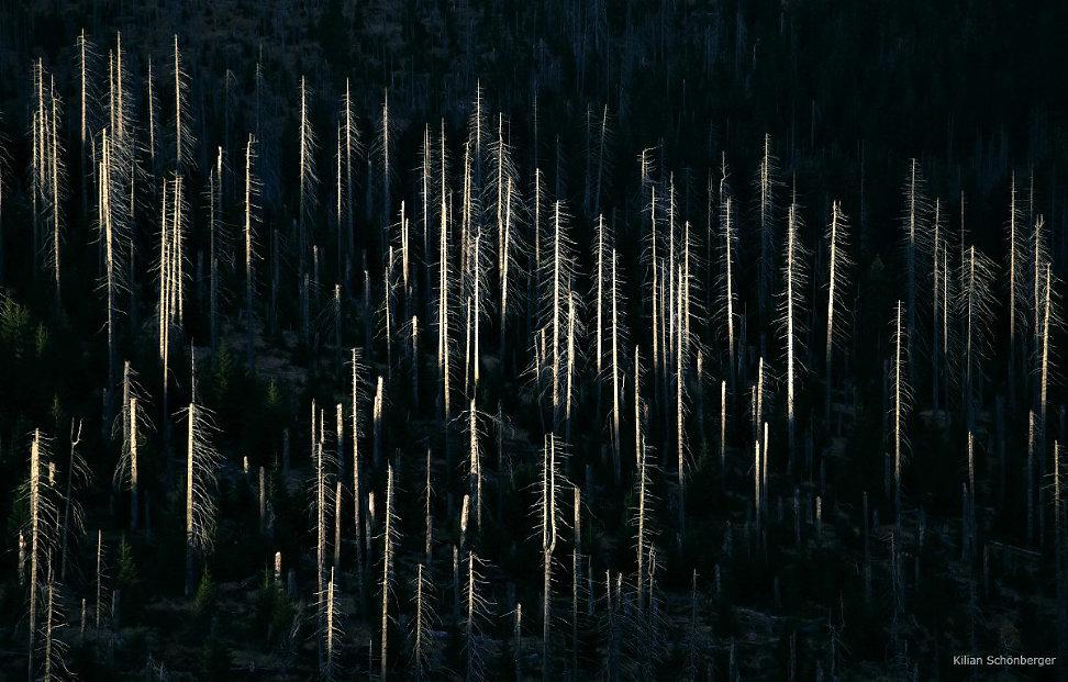 foggy-forest-7.jpg