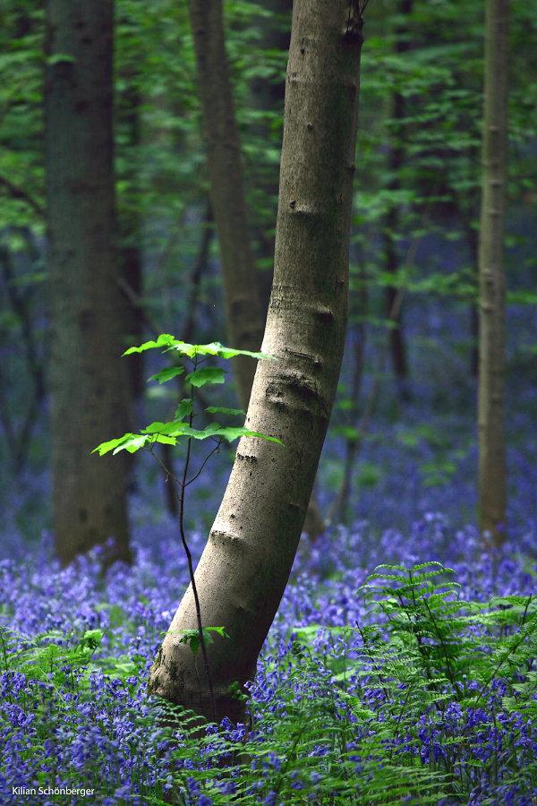 Blueforest-4.jpg