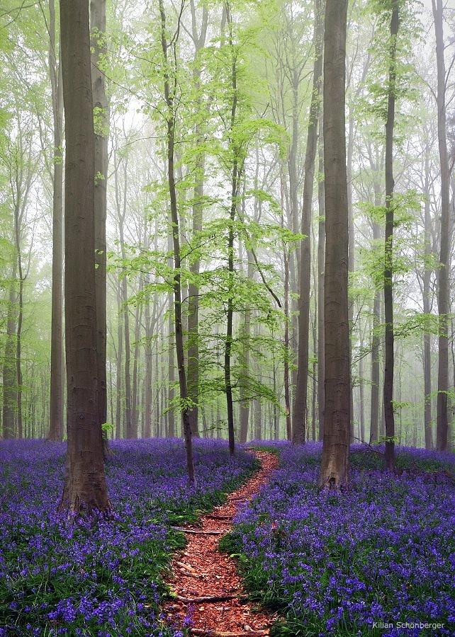 Blueforest-7.jpg