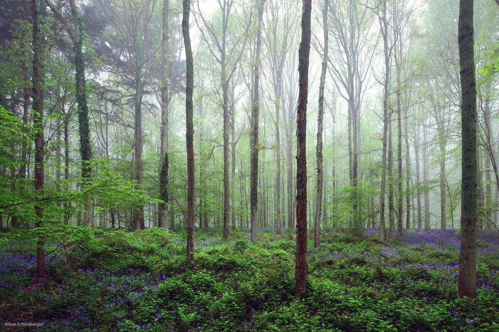 Blueforest-8.jpg