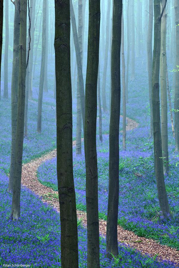 Blueforest-2.jpg
