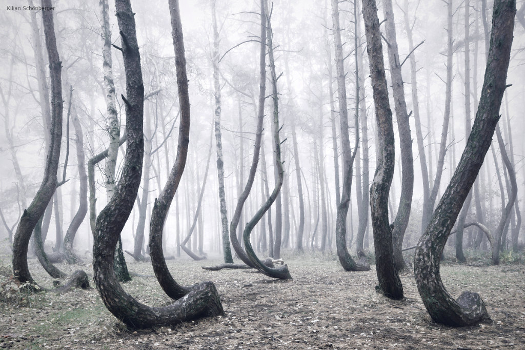 The-Crooked-Forest-Kilian-Schoenberger-7.jpg