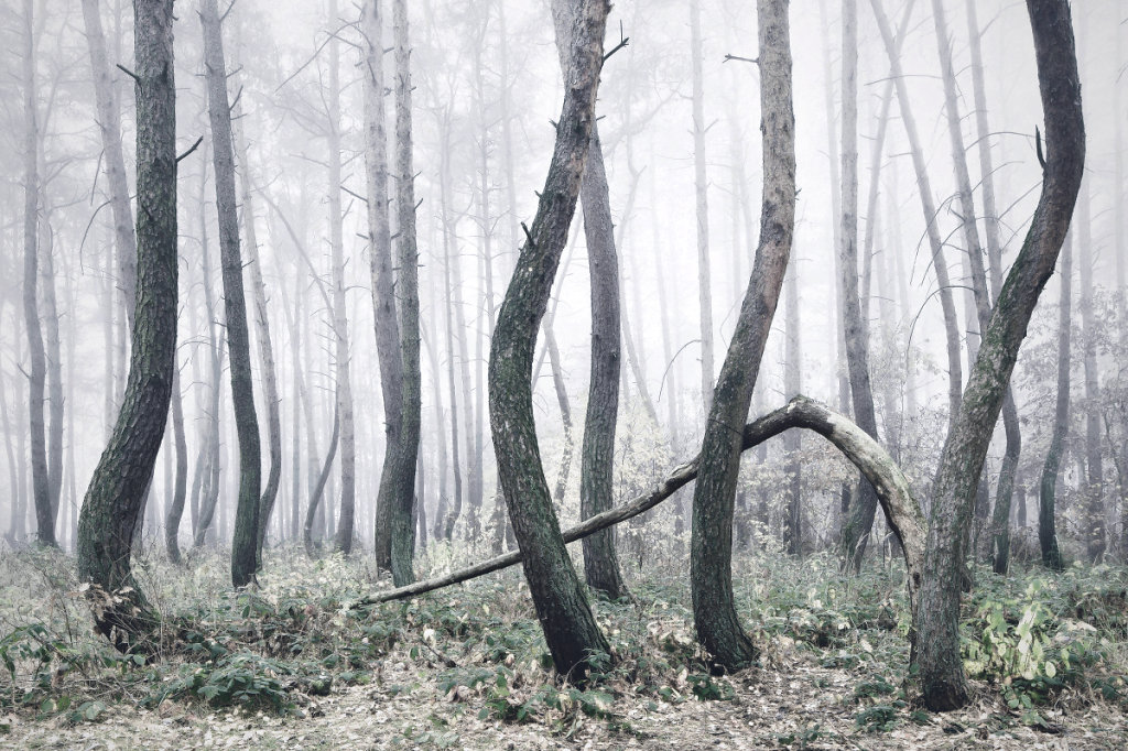 The-Crooked-Forest-Kilian-Schoenberger-11.jpg