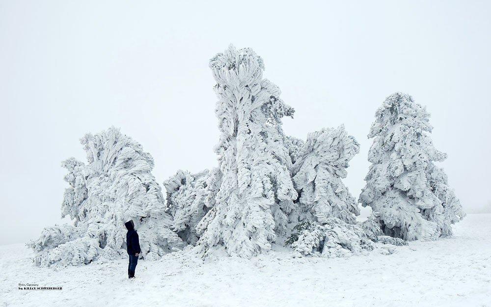 wald winter bäume